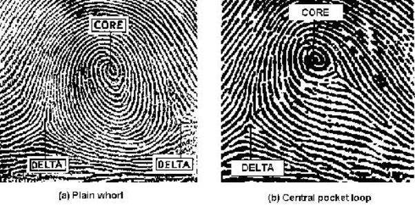 Rilevamento e Comparazione Impronte Digitali